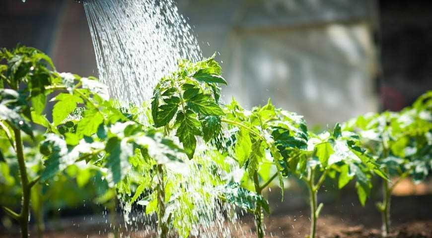Рекомендации по уходу за тепличными растениями