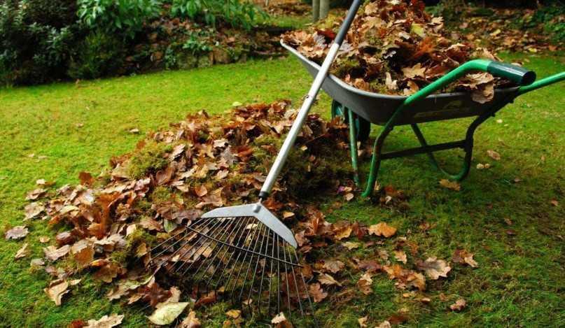 Чистота газона