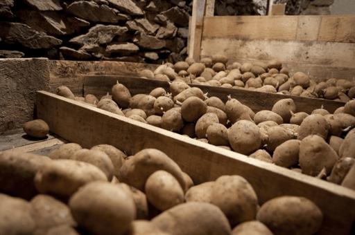 Хранить картофель