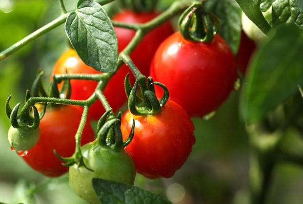 Культуры для круглогодичного выращивания