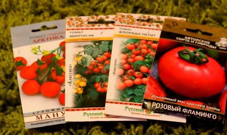 Выбор семян и рассады томатов