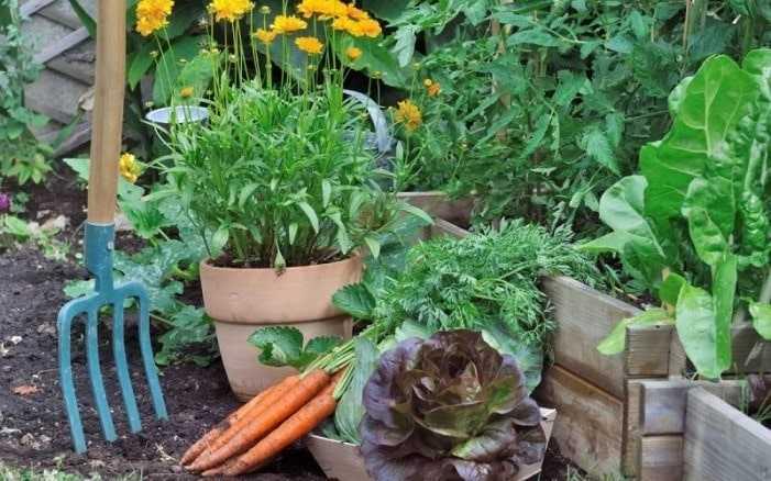 Посадка газона, цветочных и овощных культур