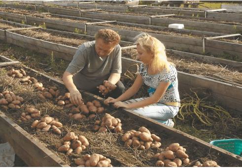 Посадка картофеля в короба