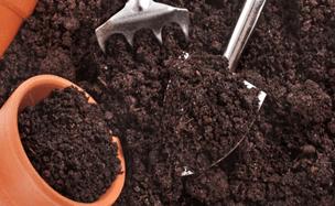 Подготовка тары и почвы под рассаду моркови