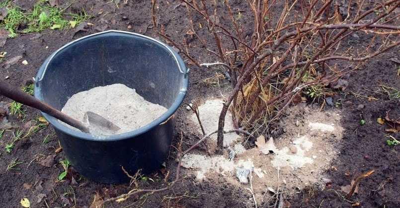 Удобрения, которые вносят осень под кустарники
