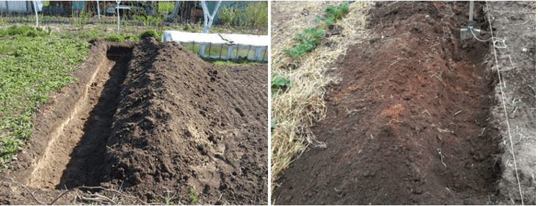Для посадки картофеля следует подготовить траншею