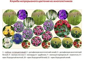 клумба непрерывного цветения из многолетников
