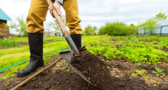Почва для картофеля в открытом грунте